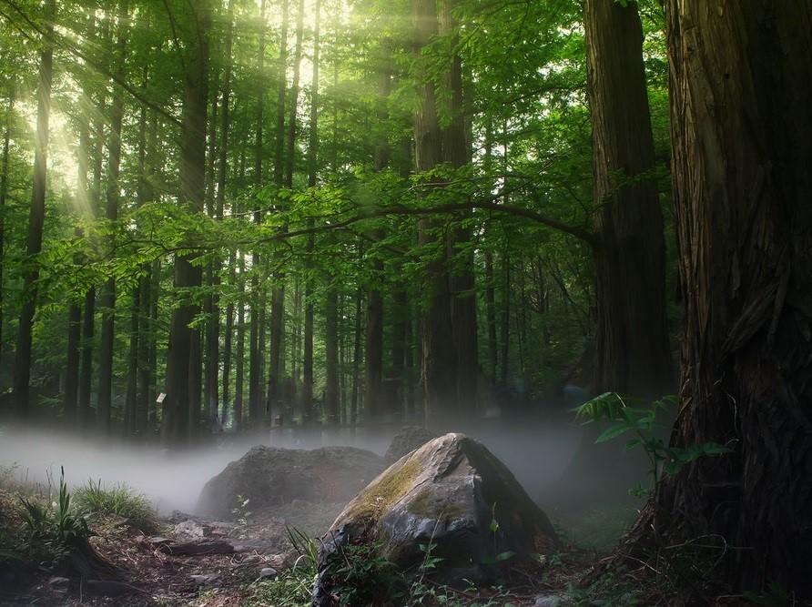 Trees: Photo by Zhang Kaiyv